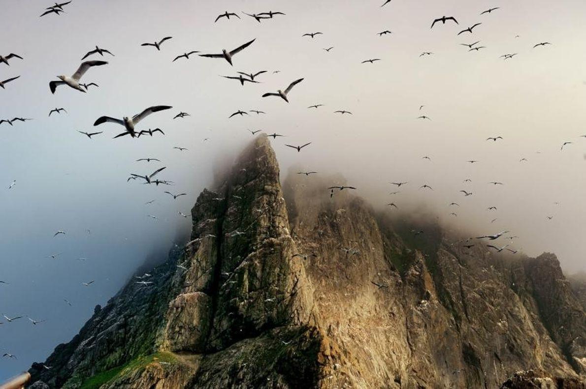 Una colonia de aves marinas