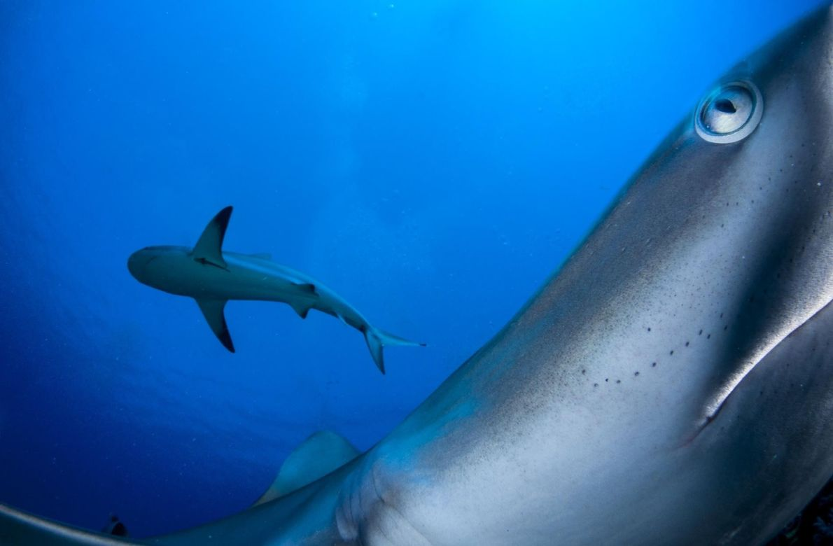 SHANE GROSS, NATIONAL GEOGRAPHIC YOUR SHOT