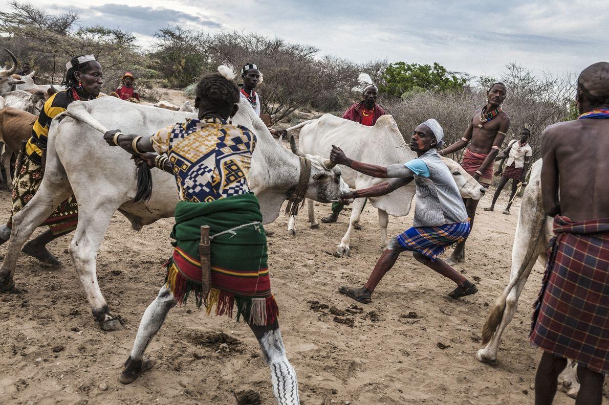 Unos hombres hamer llevan a su ganado