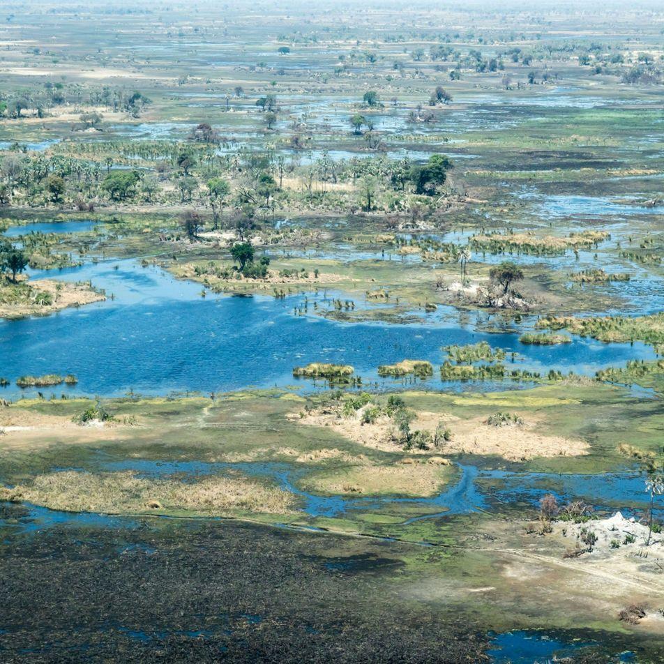 Acusan a la petrolera que explora en un hábitat de elefantes de ignorar las preocupaciones de ...
