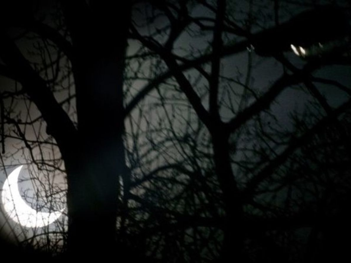 Eclipse en el bosque