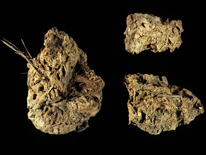 El perro doméstico más antiguo de América era comida para humanos ...