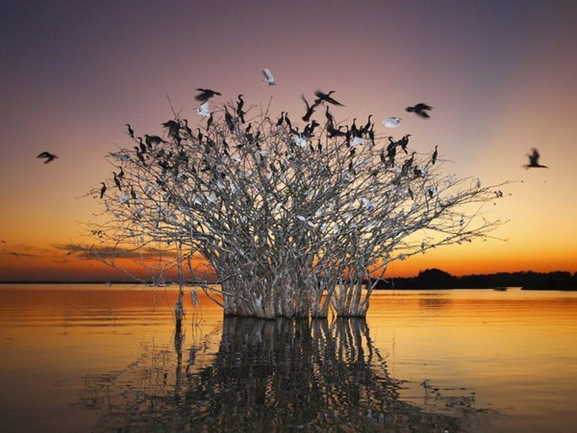 Pájaros sobre en un árbol