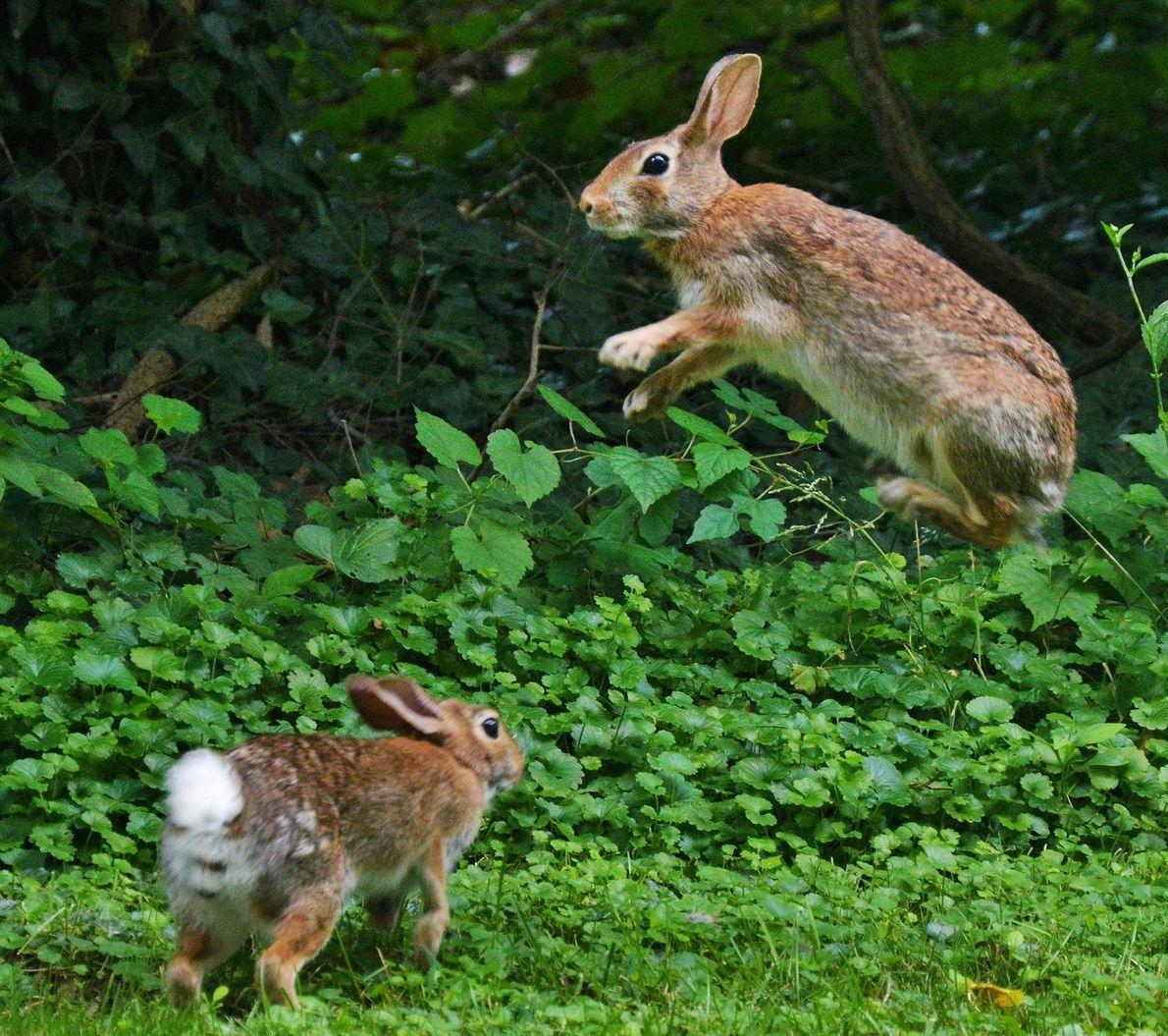 Dos jóvenes conejos
