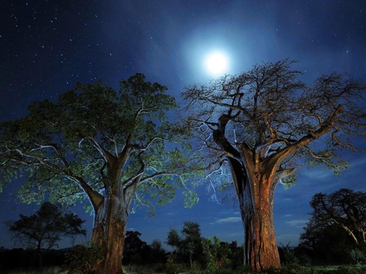 Silueta de árboles bajo el cielo nocturno