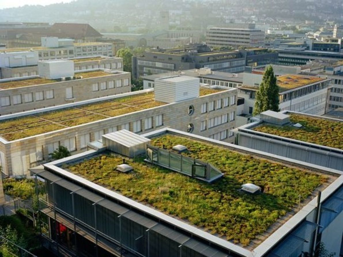 Los techos verdesadornan los edificios de Stuttgart, Alemania, ciudad donde el estudio ha encontrado una tasa …