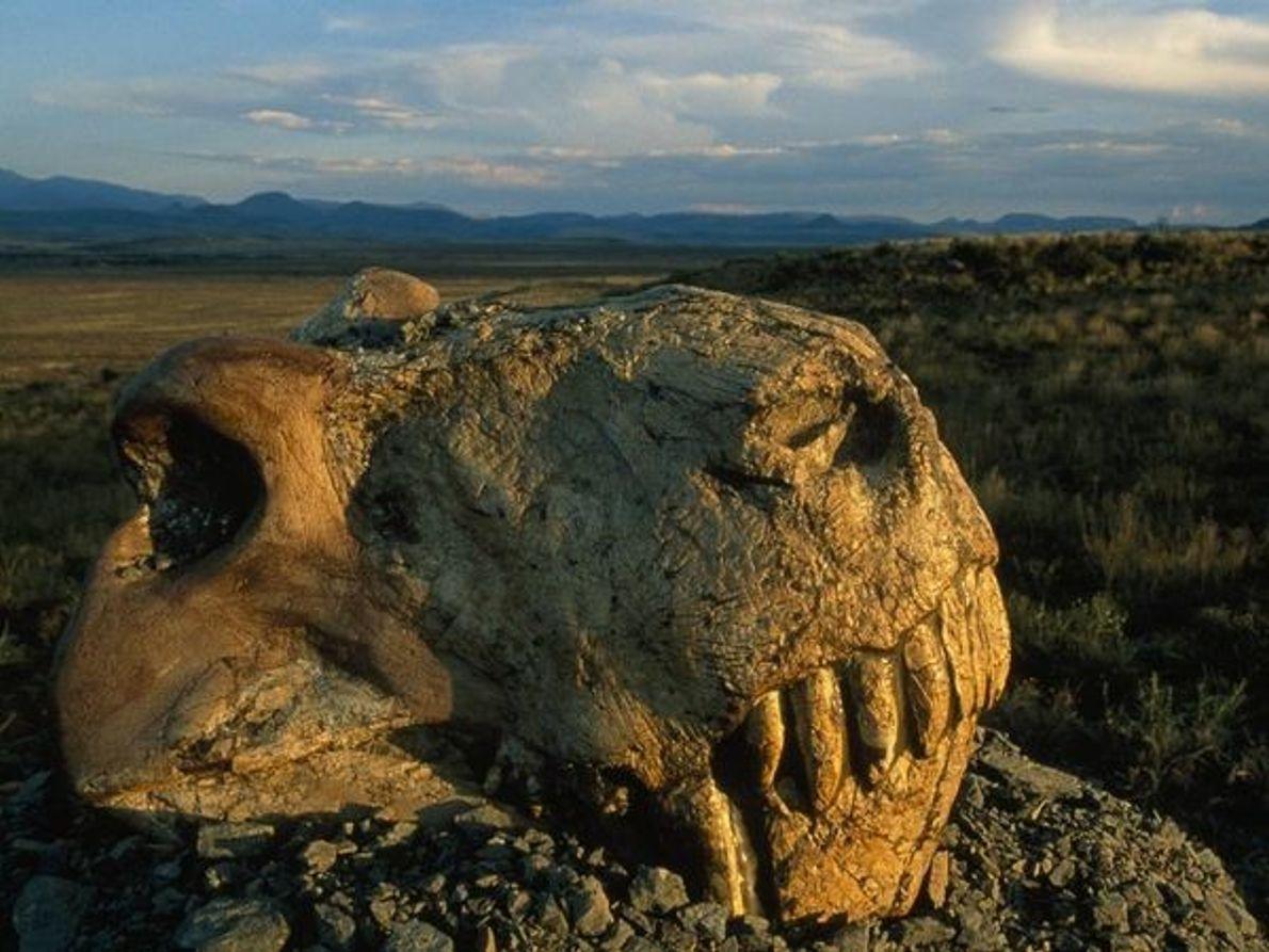 Cráneo de Dinogorgon