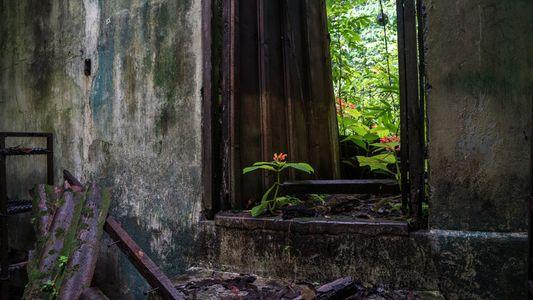 Coíba, las ruinas de una antigua cárcel insular que ahora es un paraíso natural