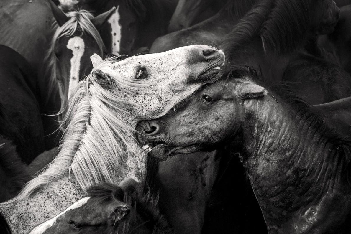Rapa das Bestas