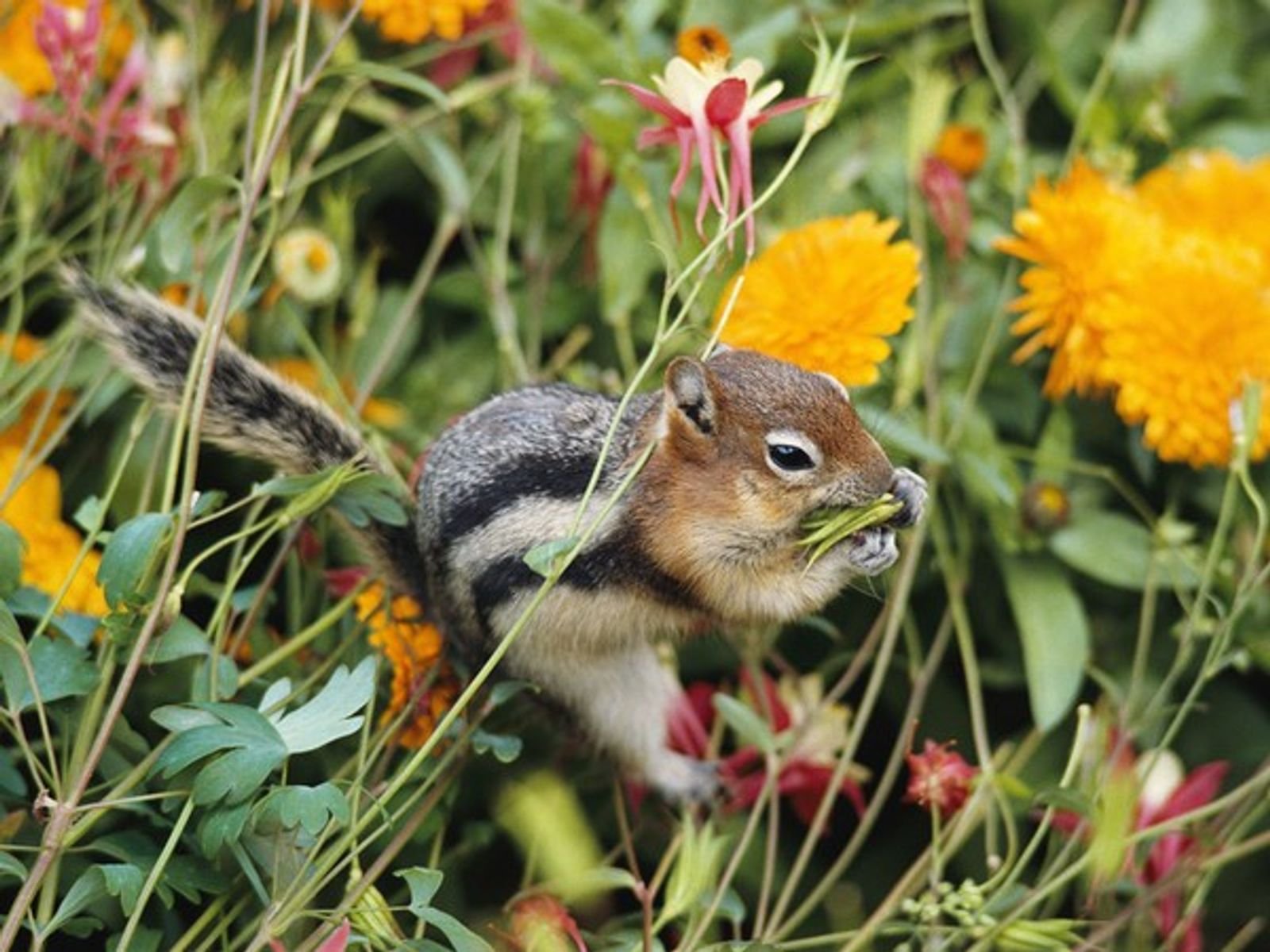 ardillas en tu jardin