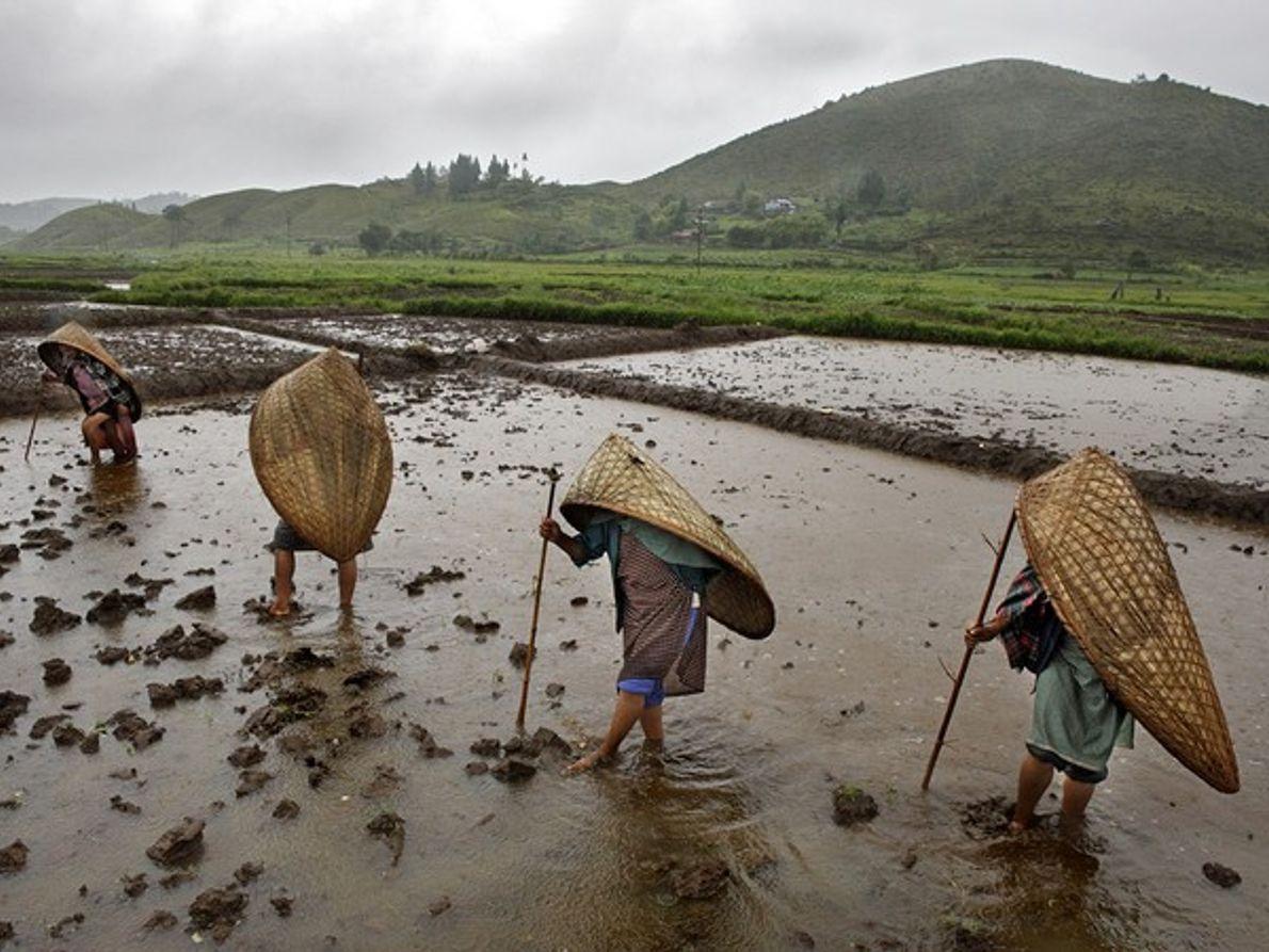 Mujer trabajando en un campo de patatas