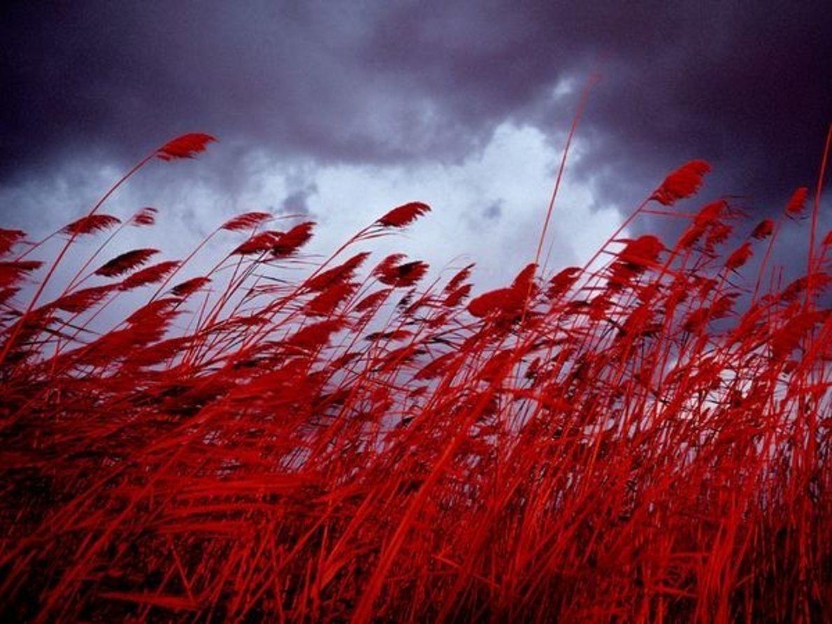 La naturaleza en rojo