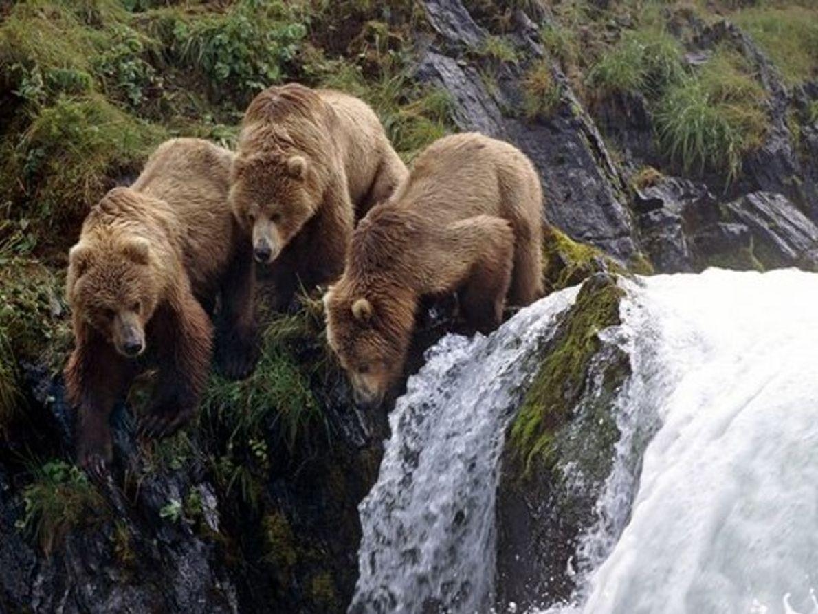 Islas Kodiak, Alaska