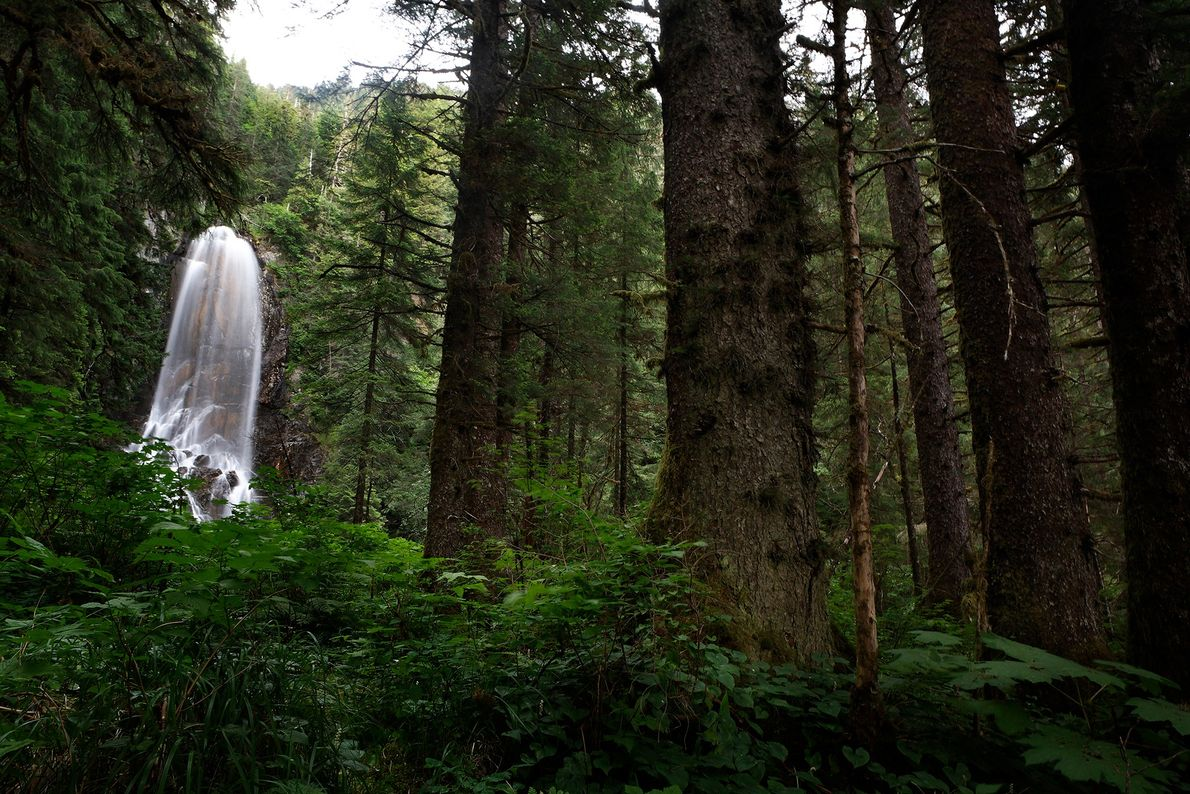 Bosque nacional de Tongass, Alaska