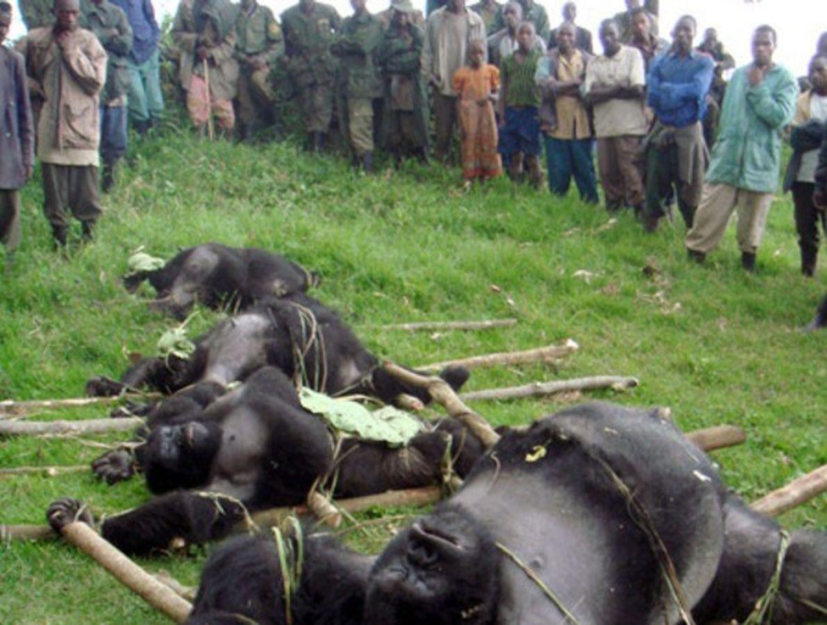 Gorilas asesinados