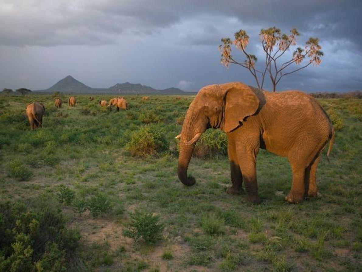 Parque Nacional de Samburu, Kenia