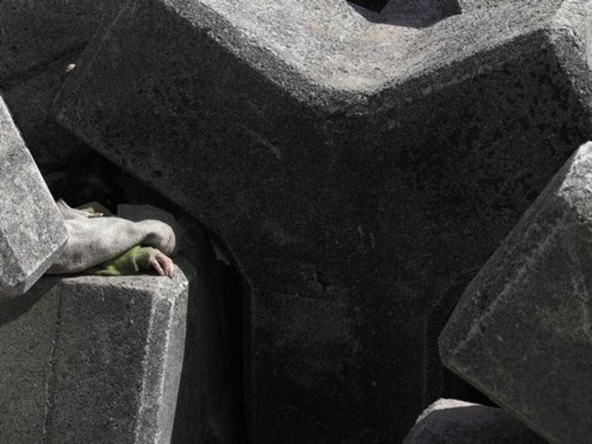 La mano de un hombre muerto por el terremoto de Japón se asoma en medio de …