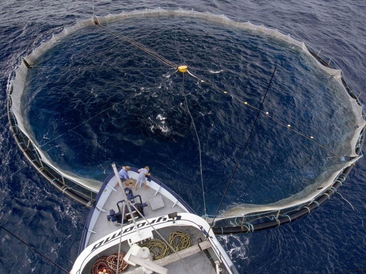 Red de atún, océano Antártico