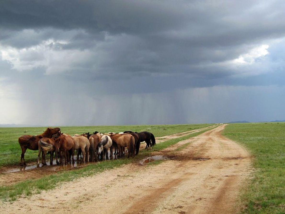 Ponis acurrucados bajo la tormenta