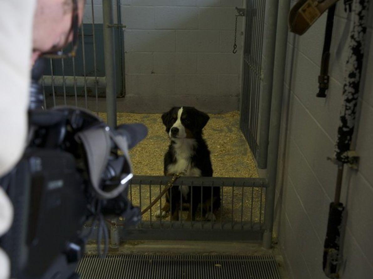 La fundación MIRA de Quebec tiene un centro de servicio para entrenar a perros que puedan …