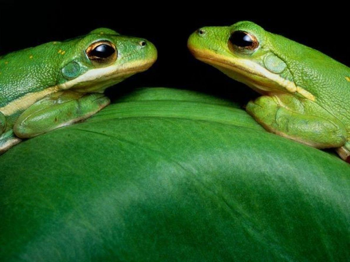 La vida de color verde