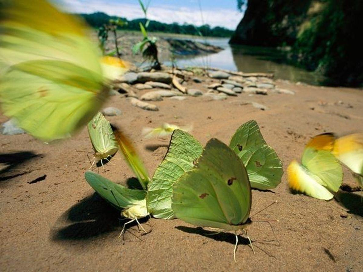 Mariposas en la orilla