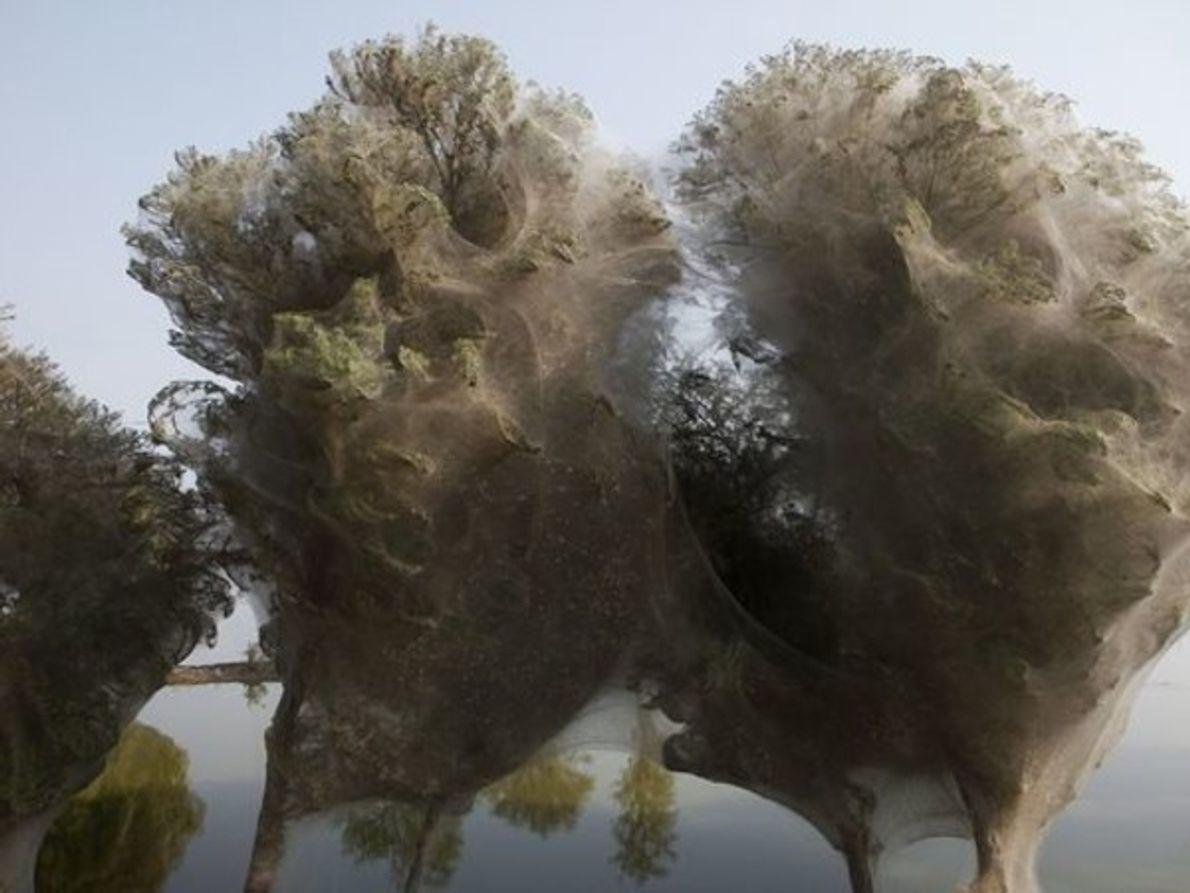 Árboles conectados