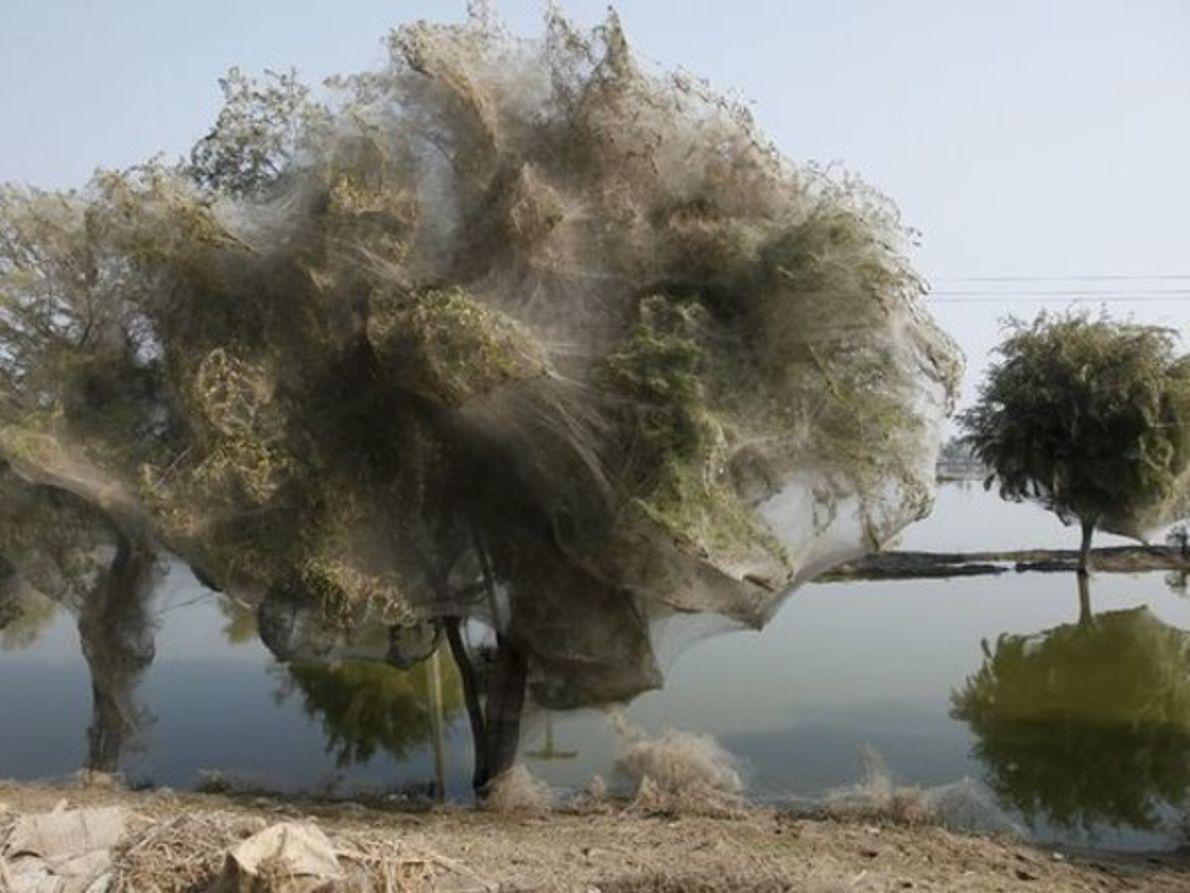 Árboles momificados