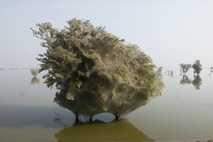 Islas de arácnidos