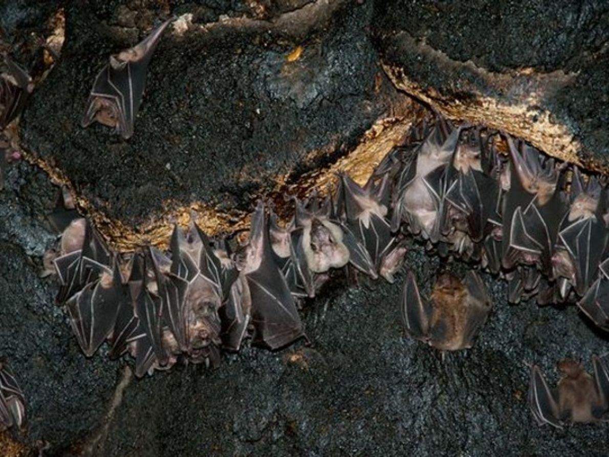 Cueva de guano-cubierto