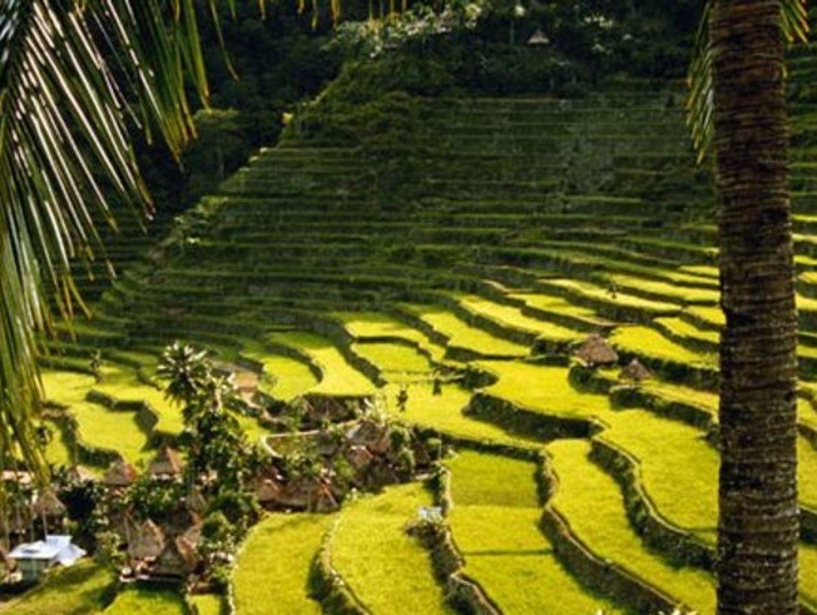 Terrazas de arroz en Banaue