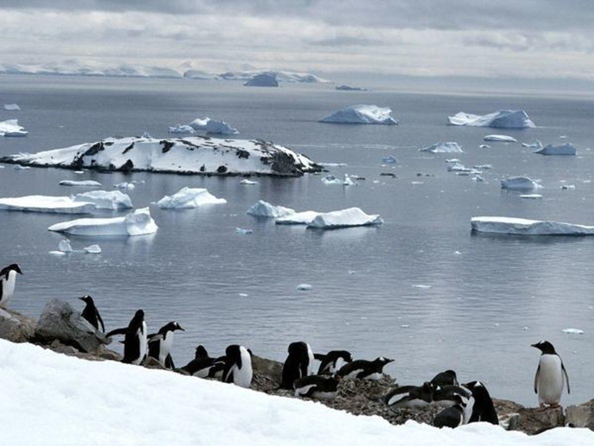 El calentamiento global está provocando serios deshielos en la Antártida