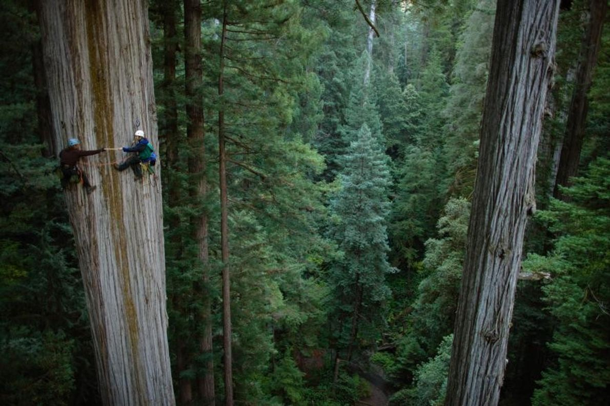 Parque Nacional Redwood, California