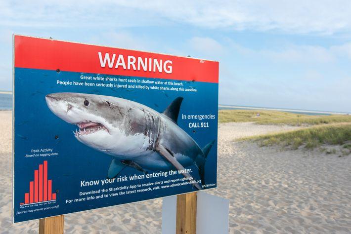 Un carteladvierte a los bañistas de la presencia de tiburones