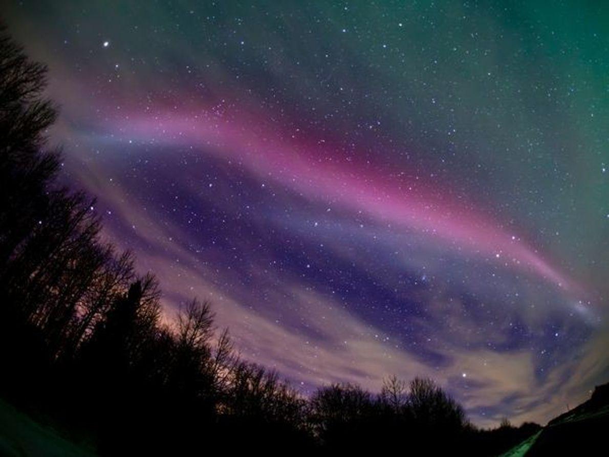 Su Majestad: la Aurora Magenta
