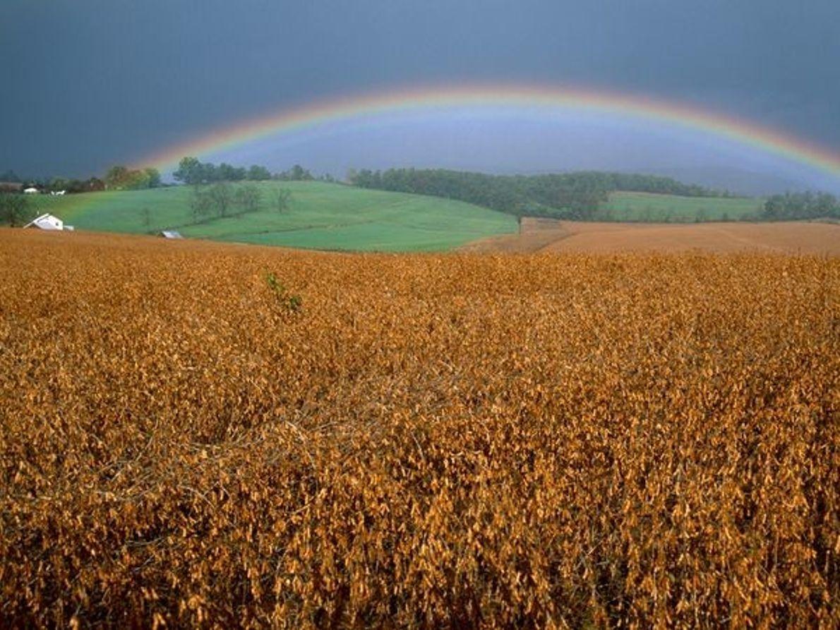 Arco iris sobre campo de soja