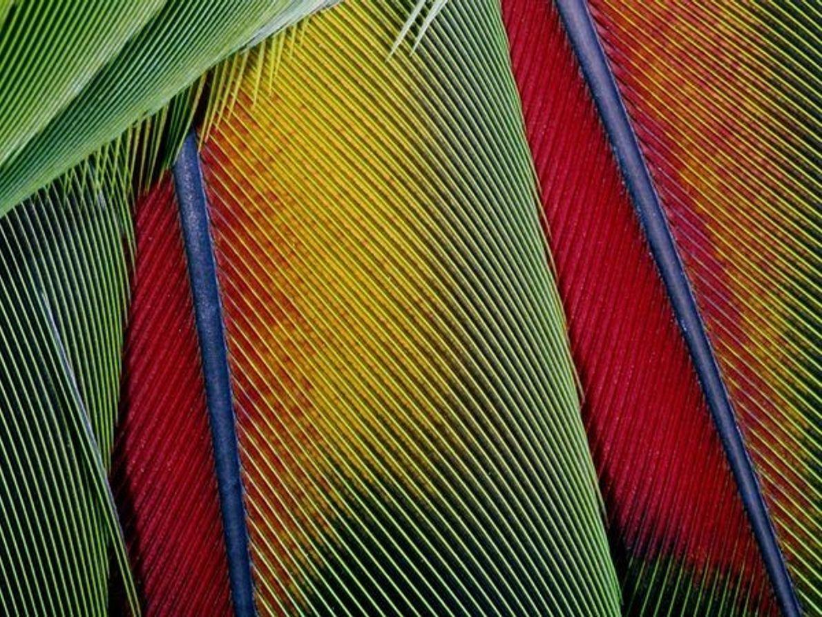 Plumas de ave