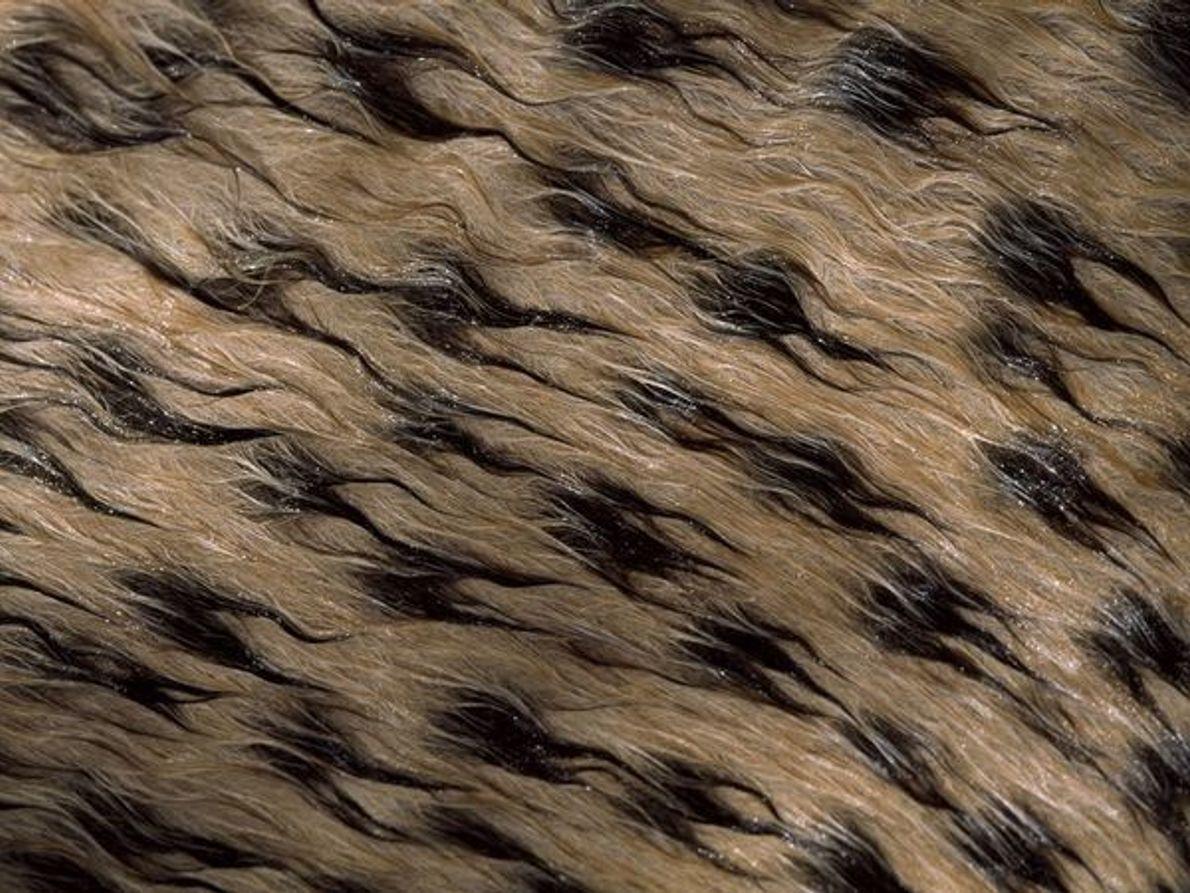 Piel de guepardo