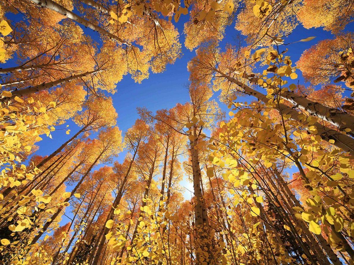 Árboles en Otoño, Utah