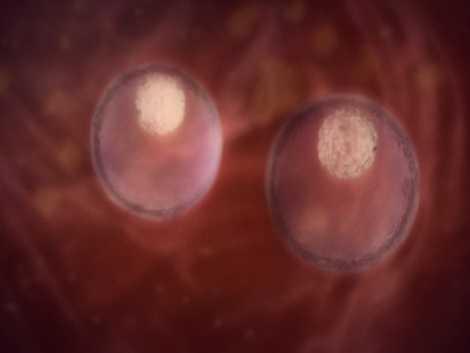 La gestación de un embarazo múltiple mes a mes | National Geographic