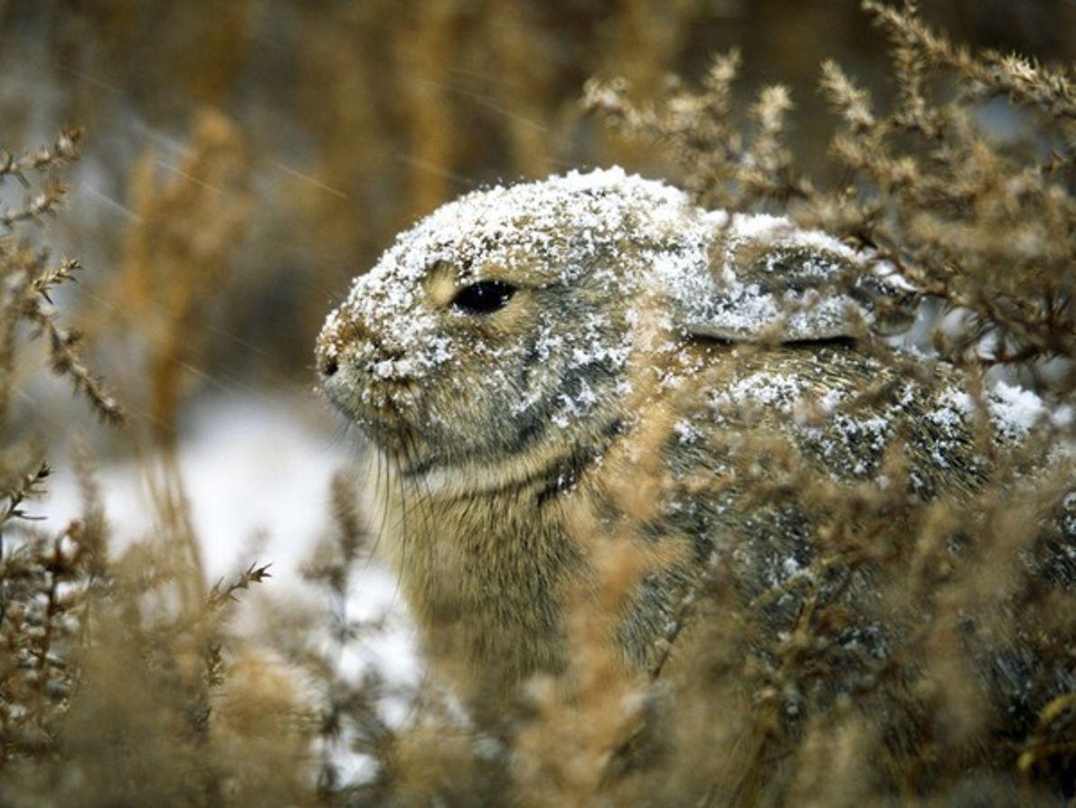 Duro invierno en la Vida Animal