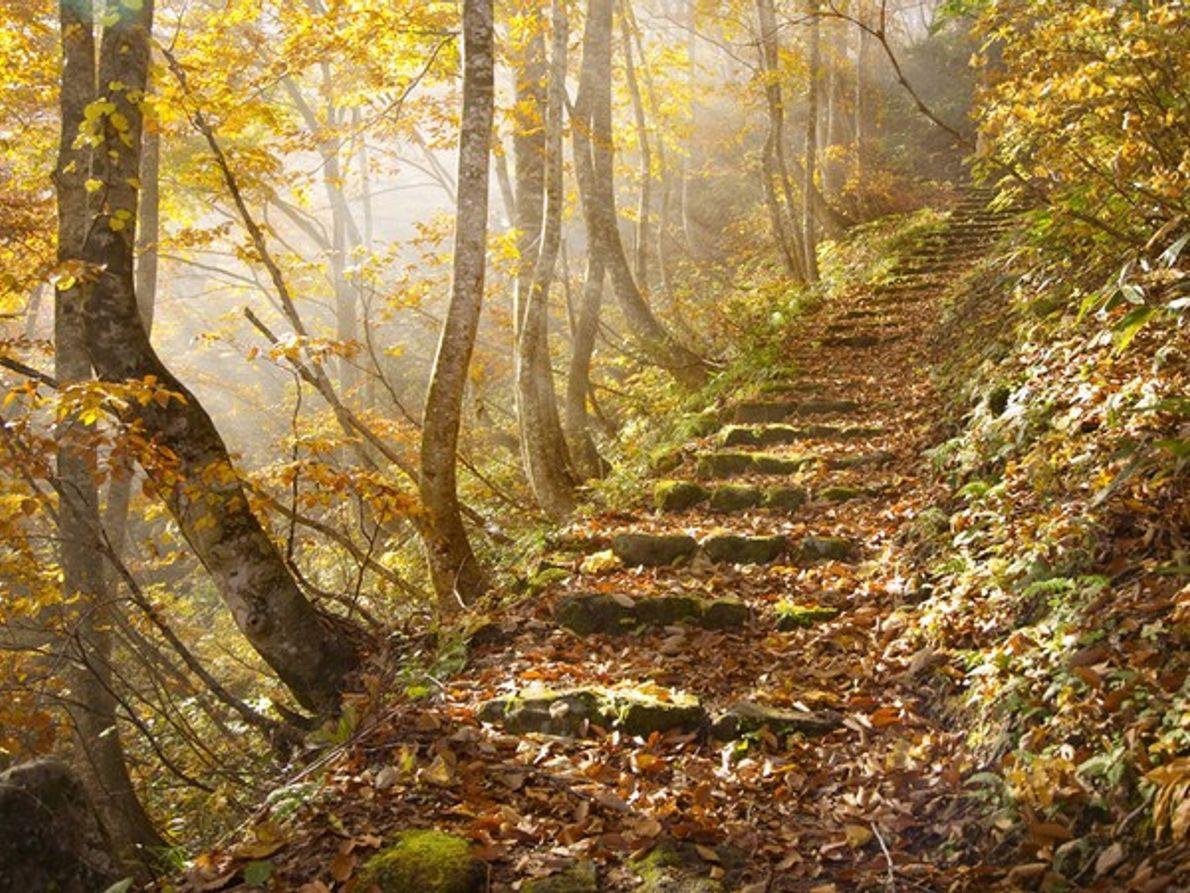 Hojas de otoño, Japón