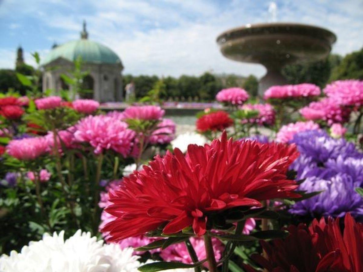 Flores en Múnich, Alemania.