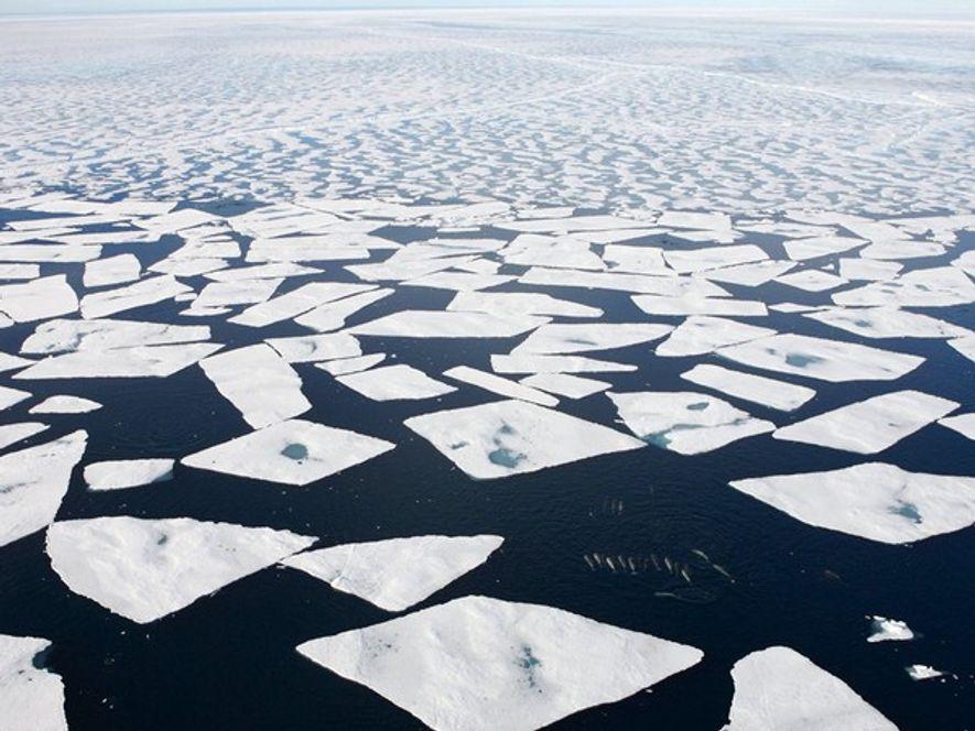 El hielo del océano ártico ha entrado en un «espiral descendente» debido al aumento continuado de ...