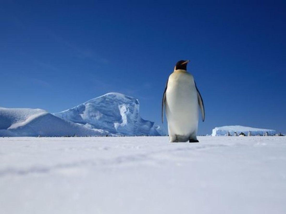 Biodiversidad: la Ántártida