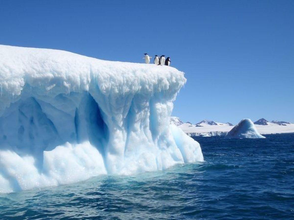 Diablo Isla Pingüinos