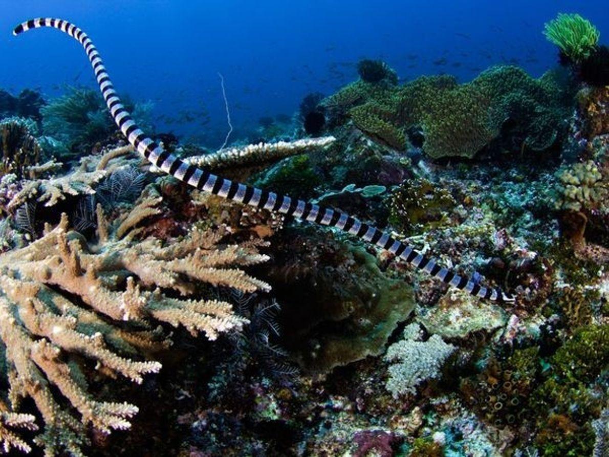 Las criaturas marinas más tóxicas