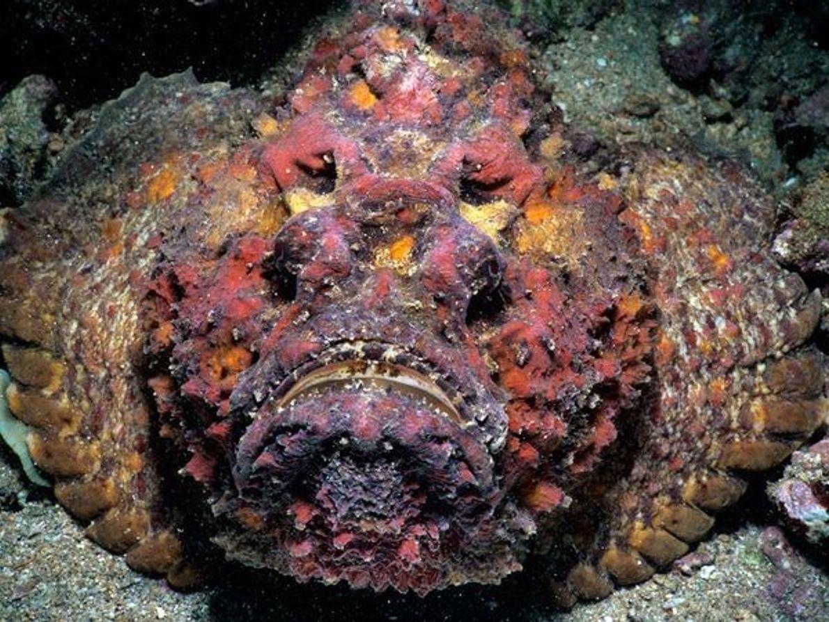 Las especies marinas más tóxicas