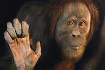 ¿Cómo se puede saber si una especie está en peligro de extinción?