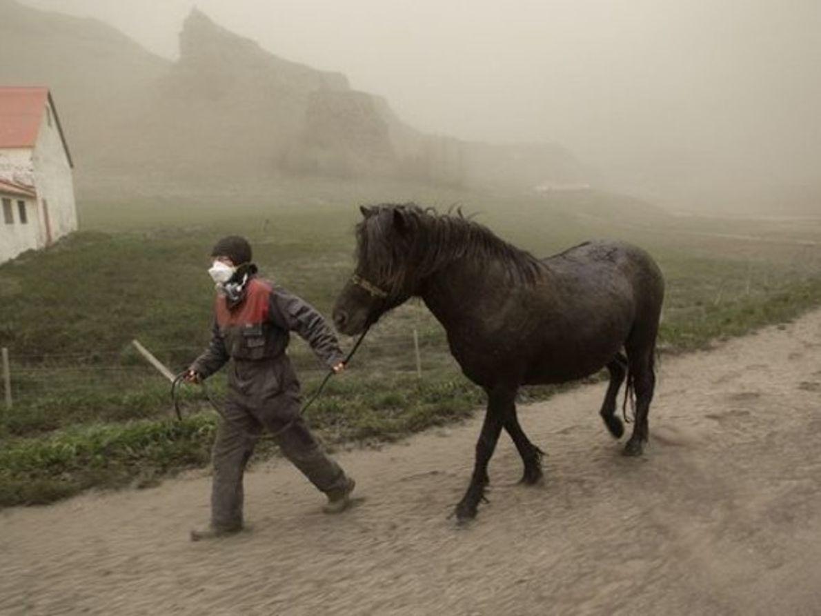 Conduciendo a un caballo a un sitio seguro